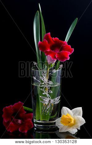 floral composition  frame glass lilia gloxinia black background
