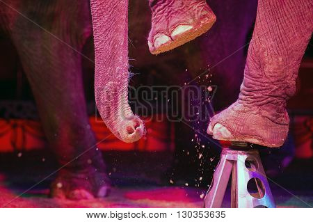 Circus Elephant On The Black