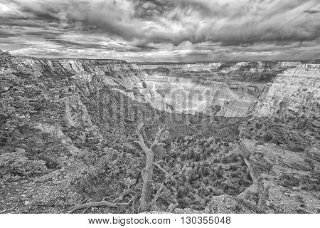 Wonderful Grand Canyon North Rim View At Sunset In B&w