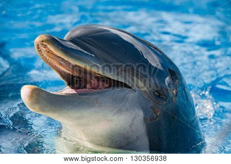 Smile Of A Dolphin Looking At You