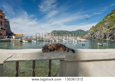 Cat While Resting In Vernazza Harbor