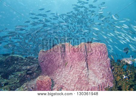 A Giant Sponge In The Blue Background