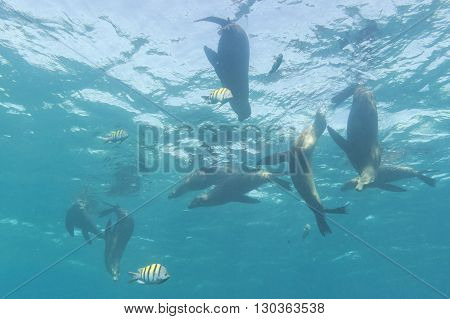 A Group Of Sea Lions Underwater