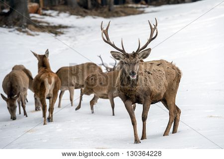 Deer Family Portrait While Looking At You