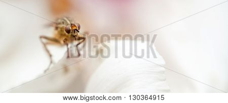 Harmful insect parasite on white petal closeup.