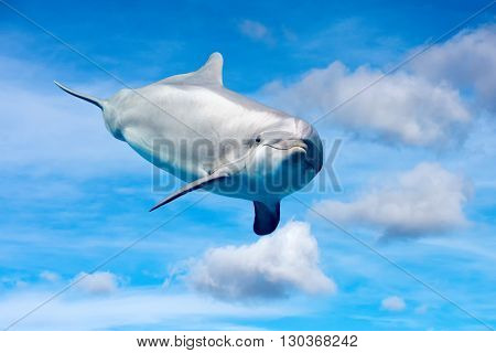 Dolphin Playing In The Sky