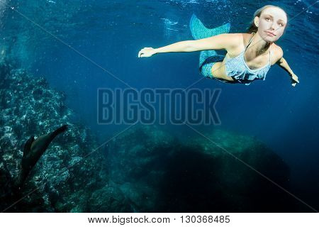 Blonde Beautiful Mermaid And Sea Lion