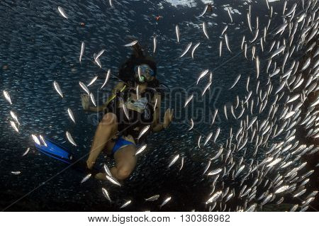 Beaytiful Latina Diver Inside A School Of Fish