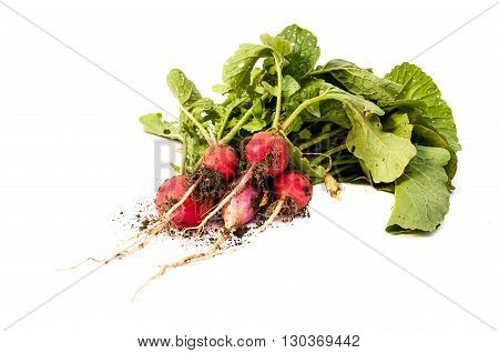 Bellomo Isolated On A Background Of Red Radish With Leaves