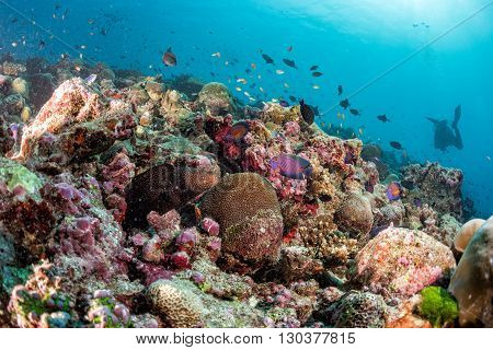 Maldives Hard Coral House For Fishes