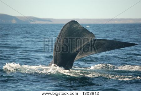 Whale Tail Diving