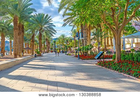 EILAT ISRAEL - FEBRUARY 23 2016: The shady green promenade with lush palms is the best place to spend the hottest hours of the day on February 23 in Eilat.