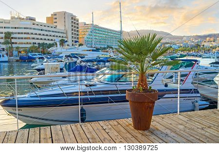 EILAT ISRAEL - FEBRUARY 23 2016: The small palm in the flower pot in the central promenade of resort on February 23 in Eilat.