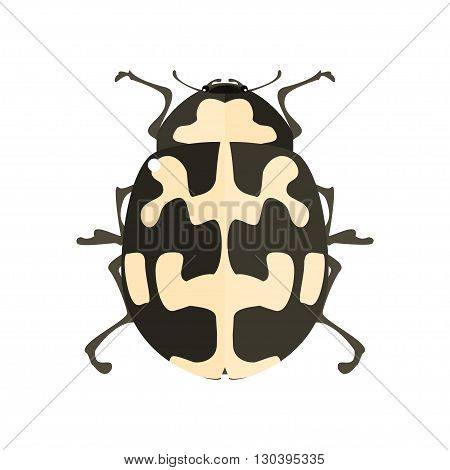 Ladybird. Insect icon. Vector illustration on a white background.