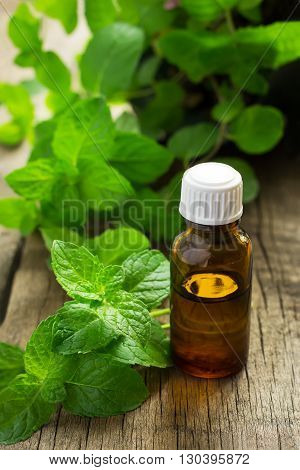 Essential oil of peppermint in a small bottle with fresh mint selective focus