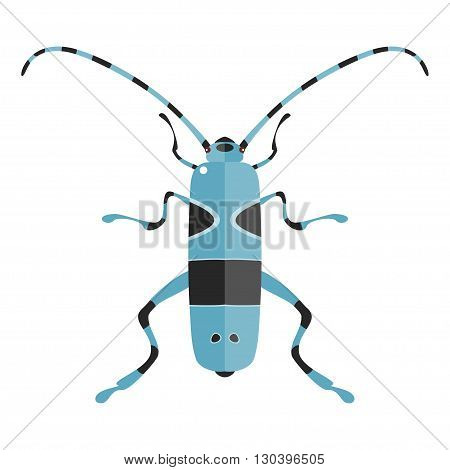 Vector illustration of a Rosalia Alpina. Isolated on a white background.