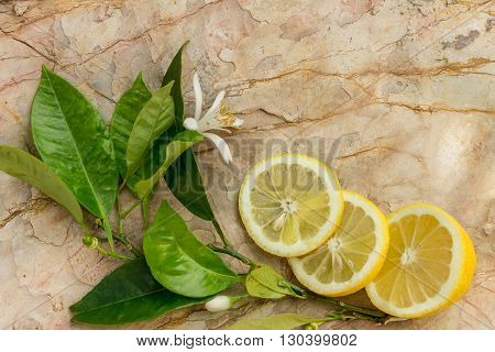 Lemon and slices of lemon decorated with a blossoming lemon tree on a stone background
