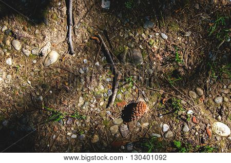 brown woodland texture nature pattern small pine cone ground