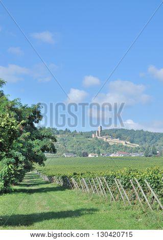 View to Village of Wachenheim an der Weinstrasse at german Wine Route in Palatinate,Germany
