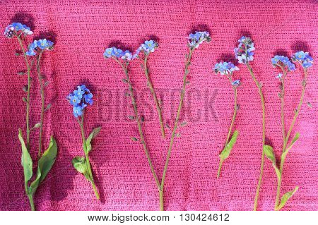 Beautiful Forget me not flowers composition background