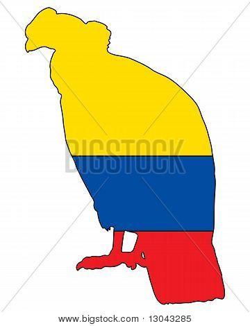 Andean Condor Ecuador