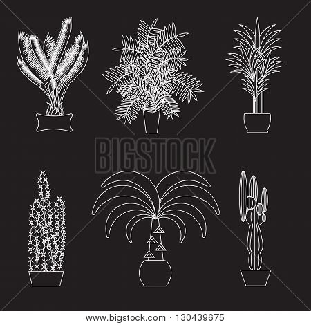 Desert plant. Illustration of palm trees on white background. Desert houseplants in pott. Set of plants and trees in desert. Potted tropical plants. Garden trees, plants from desert.