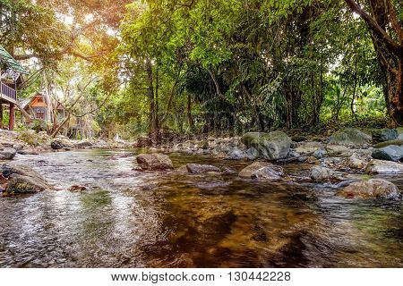 Mountain stream in green forest in sun rays. Khao Sok National Park Surat Thani Province Thailand.