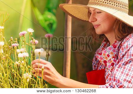 Mature Woman Gardening In Her Backyard