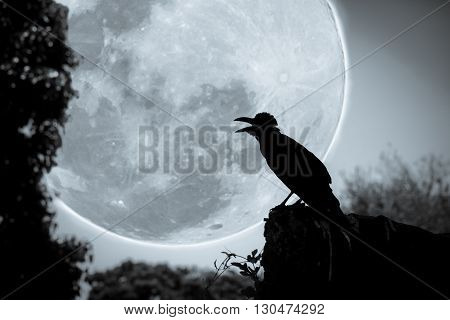 Night Sky With Full Moon, Tree And Silhouette Of Crow That Can Be Used For Halloween.