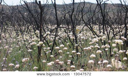 Post-fire vegetation