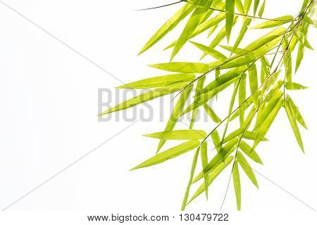 A Bamboo leaves ,Isolated on white background