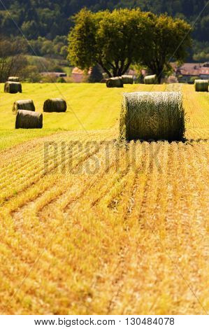 Summer farm scenery with haystacks in the field. Agriculture concept