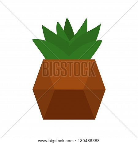 Succulents vector illustration. Plants in cute retro pots. Art of house plants from succulents. Isolated vector. Illustration for catalogs on gardening home plant. Cartoon of green dwarf cactus.