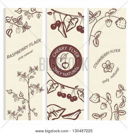 Organic cosmetic. Botanical, berry banner collection, raspberry strawberry cherry. Vector illustration