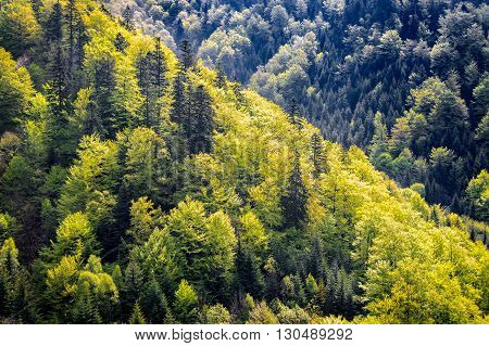 Colors Of Spring Mountain Forest