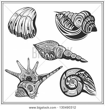 Set of isolated ornamental molluscs shells. Decorative elements in black and white colors. Abstract image on a white background for design. Vector illustration