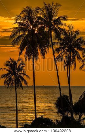 Coconut palm tree silhouette at sunset Koh Phangan island Thailand