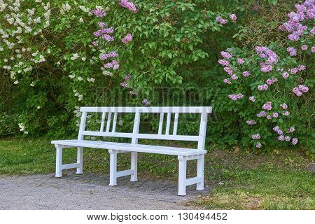 bench in front of white and purple lilac