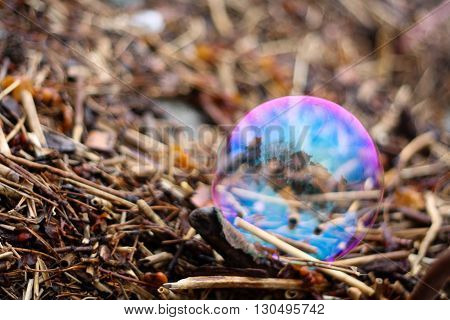 Rainbow bubble lying on fragments of twigs reeds and seaweed on the shore.