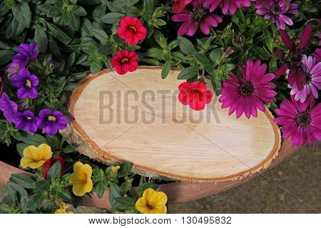 Tree Slice With Copy Space, On A Flowerpot