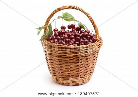 Basket full of fresh red cherry on a white background. Heap of ripe cherries with leaves in wicker basket on table