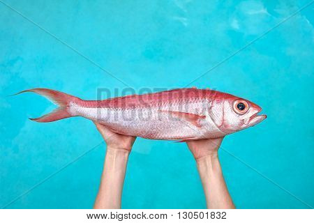 Sea bream Chillo boral in fisherwoman hands in front of blue sea background