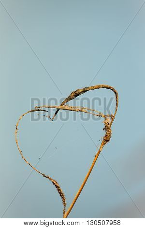 Natures Love heart, natural heart made of reeds and cobweb