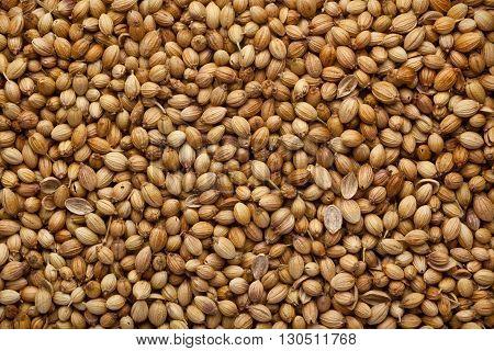 Closeup of a lot of coriander seeds