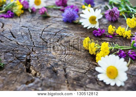 Wild Meadow Flowers on Wooden BackgroundCopy space. Free space for text