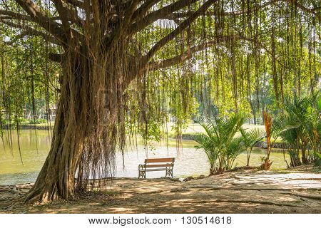 view of Big Banyan Tree and the chair