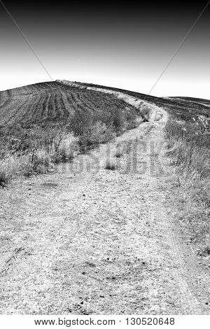 Dirt Road between Spring Fields of Sicily Retro Image Filtered Style