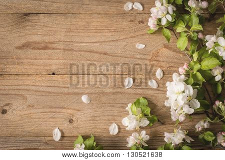 Spring post card background. Beautiful photo for post cards, gift cards etc. Rustic wooden background and apple blossoms. Copy space for text