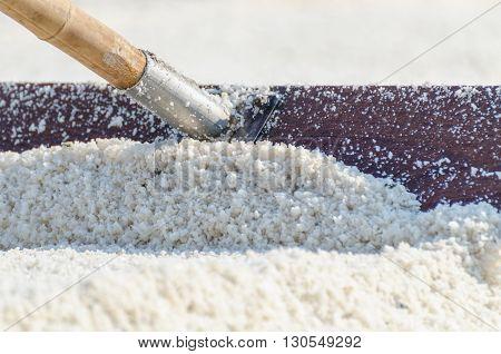 Harrow drag sea salt in harvest process at salt field in Samut Songkhram province Thailand.
