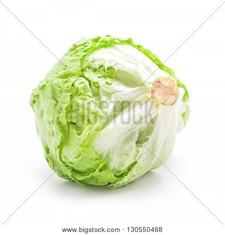 green salad cabbage head isolated on white